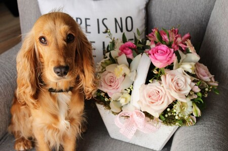 Las 7 plantas más pet-friendly para que tu mascota esté segura en casa