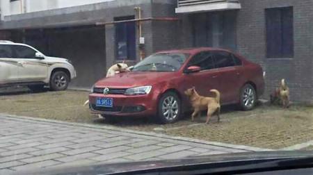 China, donde si tú pegas a un perro él morderá tu coche acompañado de sus colegas del barrio