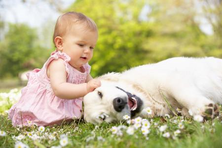 convivencia perro y bebé
