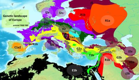 Genetic Landscape Of Europe 7000 Ybp