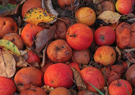 Cómo evitar que tus frutas y verduras se llenen de moho u hongos y qué tan saludable es comerlas si se lo quitas