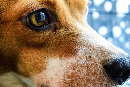 Como Fotografiar Mascotas I Perros 2