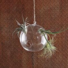 Foto 3 de 6 de la galería burbaujas-plantas en Decoesfera