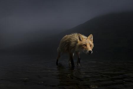 C Jonny Armstrong Wildlife Photographer Of The