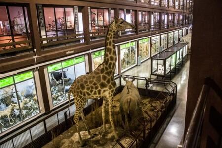 Museo Ciencias Naturales Onda