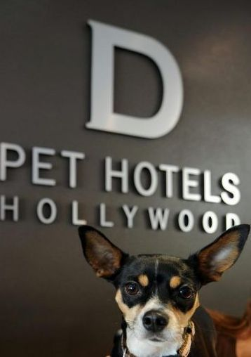 D Pet Hotels Hollywood, un resort y spa de lujo para tu mascota