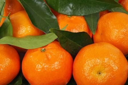 Citrus 15779 1280