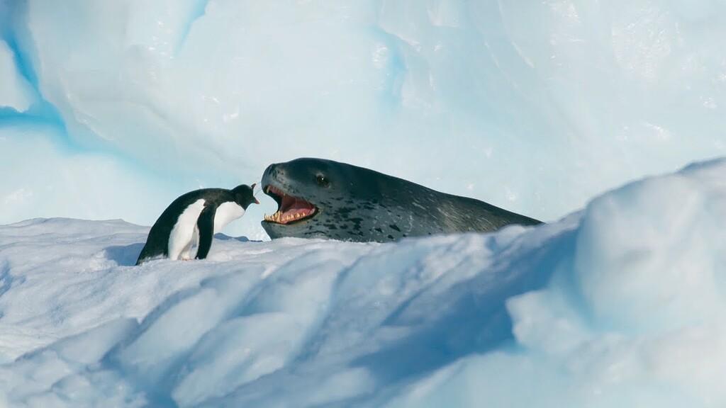 Un conflicto legal de 2001 sobre el código de Linux mantiene abierta la posibilidad de que una compañía pueda cobrar un canon por su uso