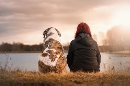 Viajar con mascotas: los destinos más 'dog friendly' del mundo