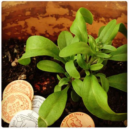 Seed Money 4