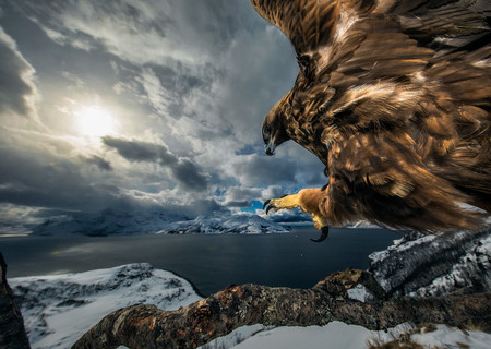C Audun Rikardsen Wildlife Photographer Of The Year