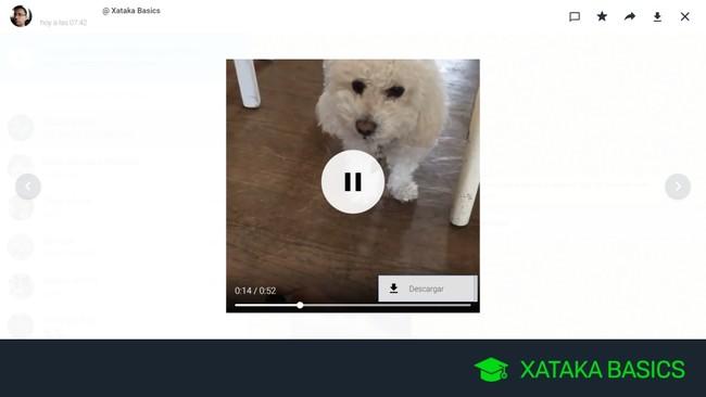Cómo descargar vídeos de WhatsApp en tu ordenador
