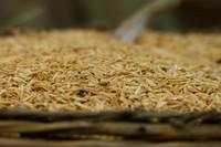 Pintura con cáscaras de arroz. Una forma inteligente de reciclar residuos orgánicos