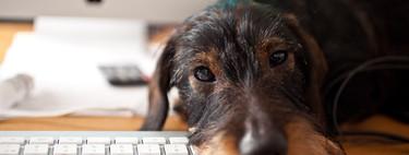 Tu perro también quiere sus gadgets: así es el multimillonario negocio de la tecnología para mascotas