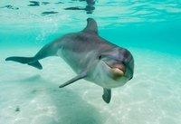 Singularidades extraordinarias de animales ordinarios (XVI): el delfín