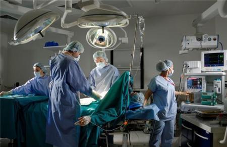 Los órganos creados en el laboratorio demuestran su validez en transplantes