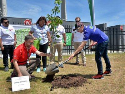 El Champions Garden de COTA ya tiene el árbol de Jorge Lorenzo
