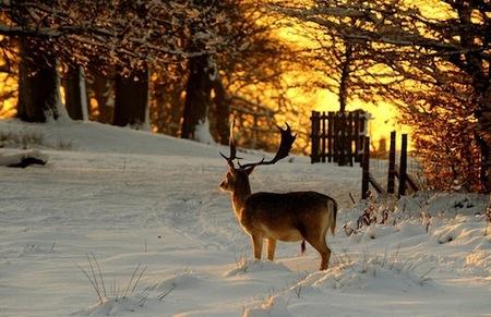 escenas-de-nieve-4.jpg