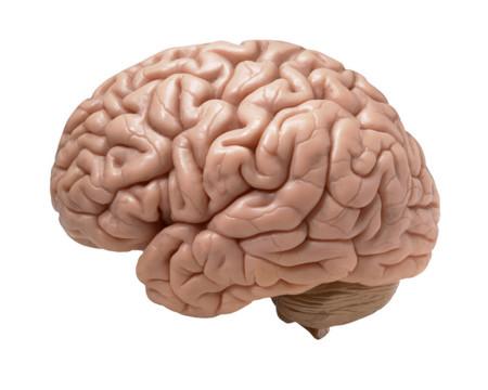 Aprende mejor con gimnasia cerebral