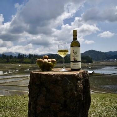 Así es el vino de kiwi: el producto que puede salvar de la miseria a una de las regiones más remotas de la India