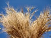 La levadura de cerveza, un remedio contra la caída del cabello