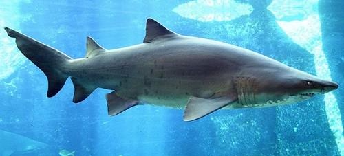 11 acuarios españoles para grandes y peques