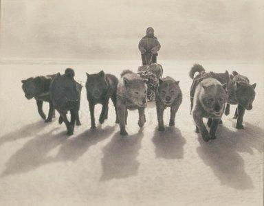 Gracias a una expedición a la Antártida, descubrimos que nunca debemos comernos un perro husky