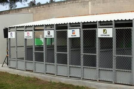 El metro de Ciudad de México es el primero en el mundo en tener un refugio para perros