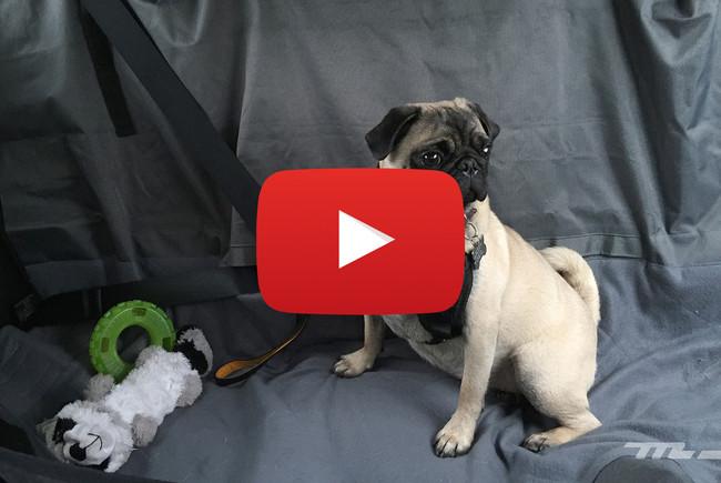 Accesorios KIA PET, videoprueba: no importa si es un perro o gato, tus mascotas también deben viajar seguras