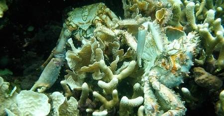 Cada vez hay más zonas en los océanos que apenas tienen oxígeno