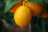 Zumo de limón en ayunas, un buen preventivo