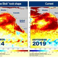 En 2014, una enorme burbuja de agua caliente surgió frente a la costa oeste de EEUU. Todo apunta a que 'The Blob' ha vuelto