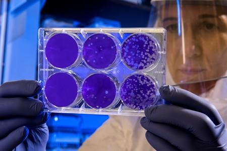 Coronavirus: en qué consiste la cepa 2019-nCoV (y cuántas posibilidades hay de que llegue a España)