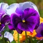 ¿Qué flores puedo plantar en mi jardín o terraza en el otoño?