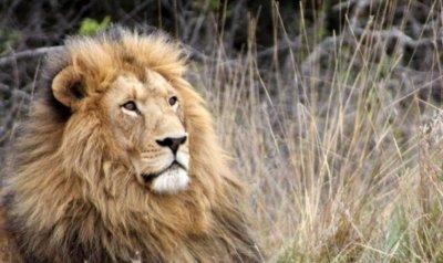 La versión Golden Master de Lion ya está disponible para los desarrolladores