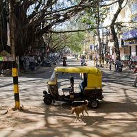 Cuando las ciudades eran auténticos paraísos naturales: lo que el mundo puede aprender de Bangalore
