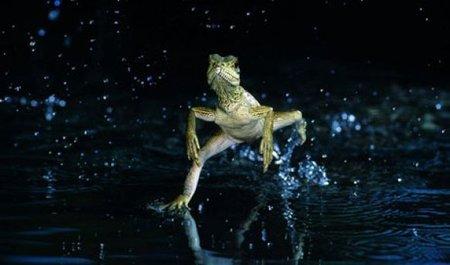 ¿Sería posible correr sobre el agua?