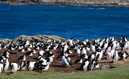 Ya puedes adquirir una isla de las Malvinas repleta de pingüinos y focas por un módico precio