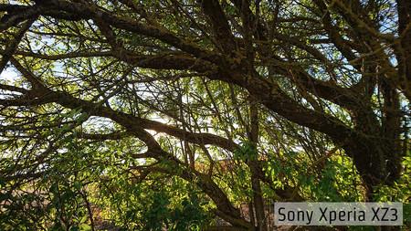 Sony Xperia Xz3 Contraluz 01