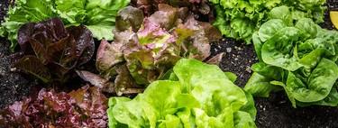 7 tipos de lechugas y cómo usarlas para preparar ensaladas deliciosas y versátiles