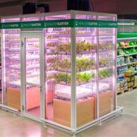 Un invernadero sostenible en el supermercado: el proyecto alemán que quiere cambiar nuestra forma de cultivar