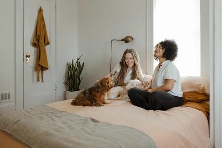 Ocho aspiradores perfectos si tienes mascotas en casa