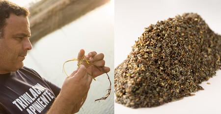 Ángel León anuncia su último gran descubrimiento: un cereal marino sostenible cultivado por primera vez en Aponiente