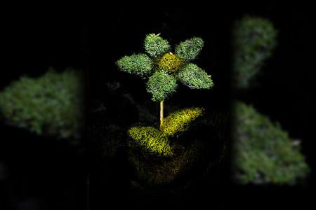 El Bosque Encantado 7