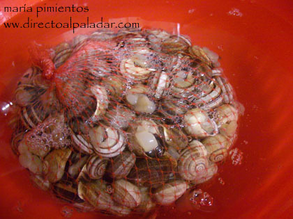 caracoles en agua