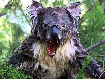 Todos los bichos de Australia que quieren matarte: capítulo II