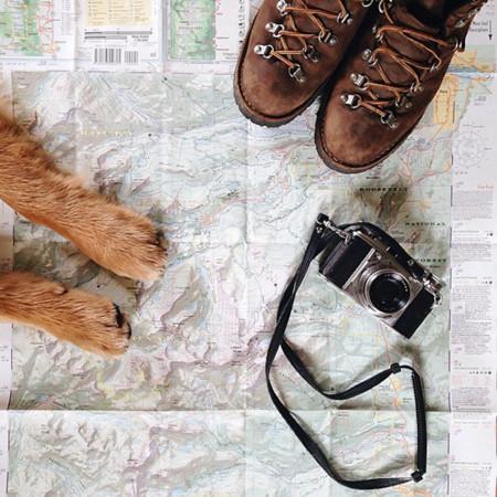 El perro no sólo es el mejor amigo del hombre, también es el mejor compañero de viajes