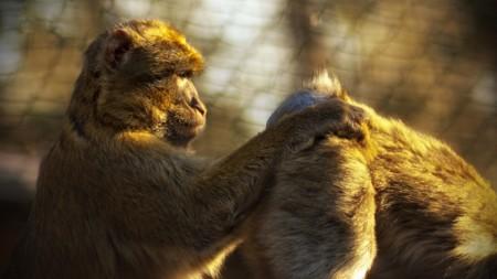 Monkey 50715 960 720