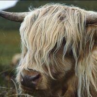 Vídeos inspiradores: Escocia, lagos, montañas y luz