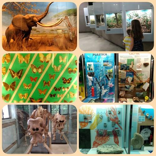 Milán, más que el Duomo: visita al Museo de Historia Natural